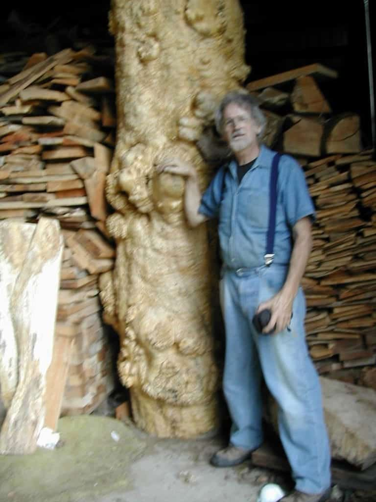 Stump to Stage: Dave Bunker sizes maple stump